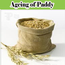 Ageing of paddy