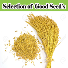 Selection of Good Seeds